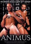 Raging Stallion, Animus